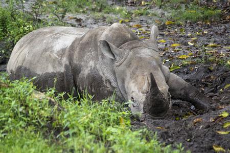 Wildlife observation, tourist safari, animals in the wild concept.