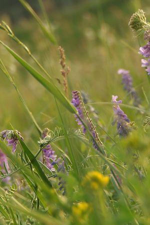 native-grasses summer