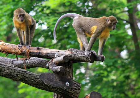 Two baboons play in zoo