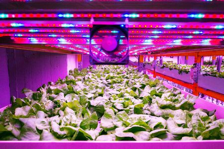Foto de Ventilator and special LED lights belts above lettuce in aquaponics system combining fish aquaculture with hydroponics, cultivating plants in water under artificial lighting, indoors - Imagen libre de derechos