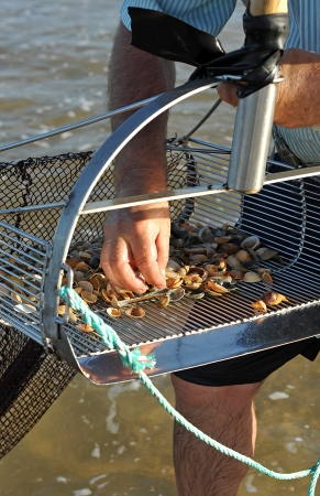 Fisherman gathering clams on the beach sand