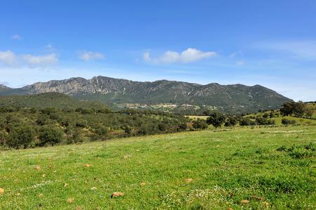 Landscape of Sierra Madrona, Mediterranean forest, Sierra Morena, Ciudad Real province, Castilla la Mancha, Spain