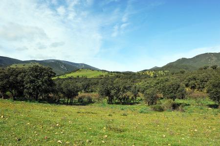 Sierra Madrona, landscape of Sierra Morena, Mediterranean forest, Ciudad Real province, Castilla la Mancha, Spain
