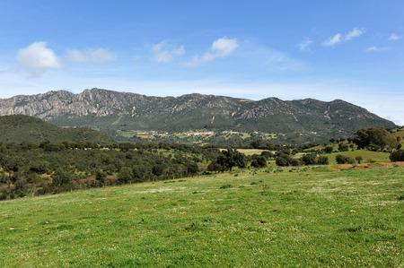 Landscape of Sierra Morena, Mediterranean forest, Sierra Madrona, Ciudad Real province, Castilla la Mancha, Spain