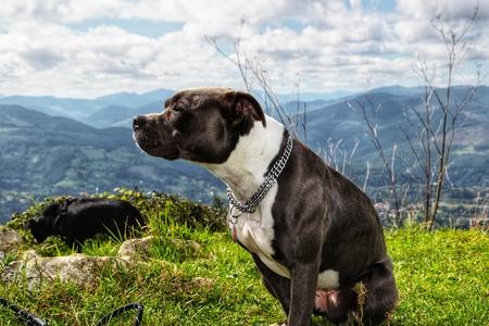 the dog enjoying the views of the Serantes