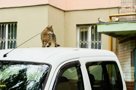 Funny cat on a car roof