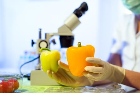 Food testing in the laboratory. GMO food. Laboratory