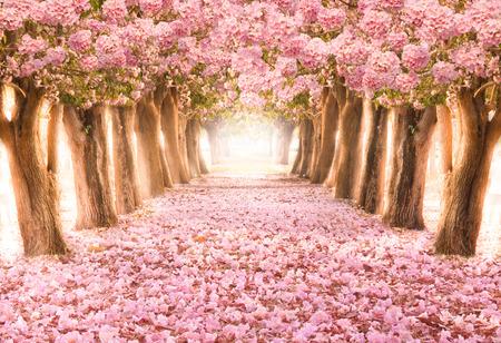 Foto de Falling petal over the romantic tunnel of pink flower trees / Romantic Blossom tree over nature background in Spring season / flowers Background - Imagen libre de derechos