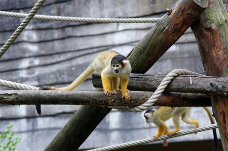 2 aapjes op een koord