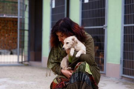 Foto de dogs in dog shelter and woman. Animal shelter - Imagen libre de derechos