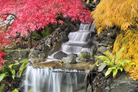 Backyard Waterfall with Japanese Maple Trees in Autumn Season