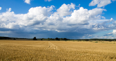 Finnish countryside and farmlands during sunny weather in the summer