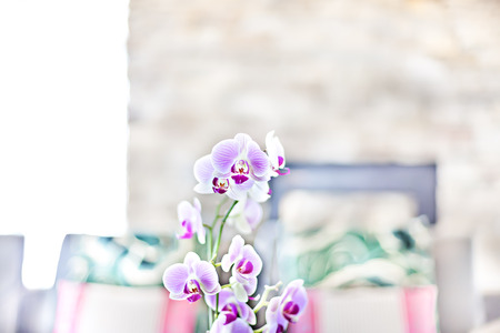 Foto für Purple orchid flower close up in the blurred pillow background in the modern house kitchen area with a fireplace - Lizenzfreies Bild