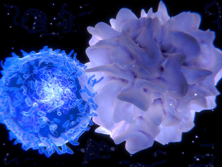 Interaction between a T-lymphocyte (left) and a dendritic cell.