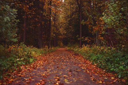 Photo pour Beautiful autumn park. Park for relax - image libre de droit