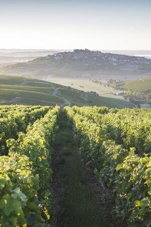 Photo pour Vineyards surrounding the village of Sancerre, France. - image libre de droit