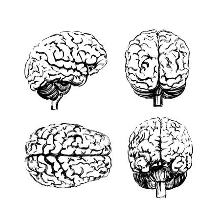 Illustration pour A set of brains in four angles made with a black ink brush. - image libre de droit