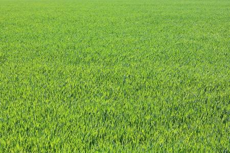 Foto de Spring green grass - Imagen libre de derechos