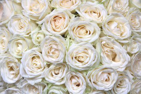 Photo pour Natural floral background with bouquet of white roses - image libre de droit