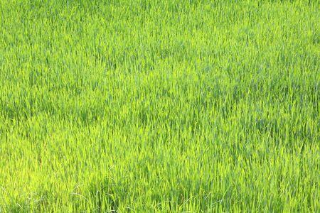 Photo pour Spring green grass - image libre de droit