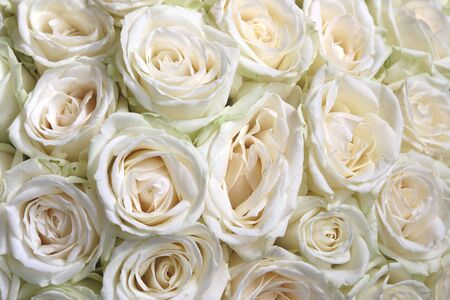 Photo for Natural floral background with bouquet of white roses - Royalty Free Image