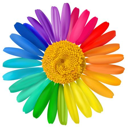 Illustration pour Vector multicolored daisy, chamomile flower isolated.  - image libre de droit