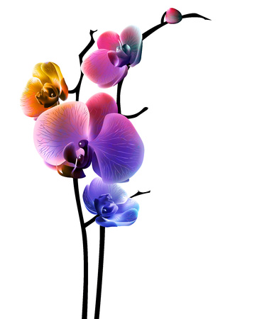 Orchid isolated flower abstract and colorful. Vector illustration, EPS 10.