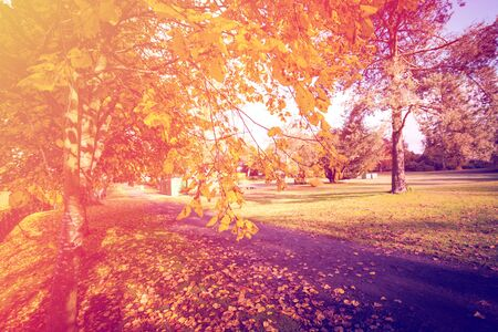 Photo for Autumn in Scotland. Gold Trees in a park - Royalty Free Image