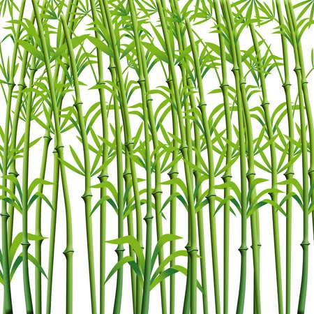 Photo pour Bamboo Branches Background Ready for design. - image libre de droit