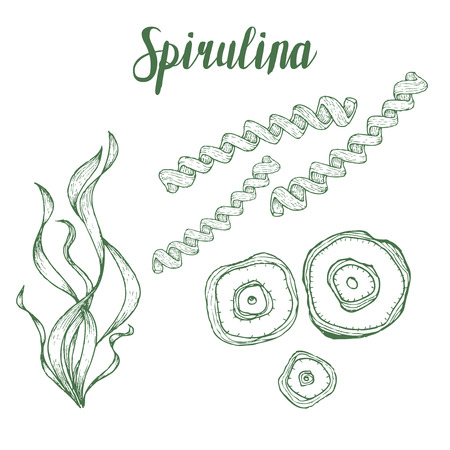 Illustration pour Spirulina superfood organic healthy dietary supplement. Hand drawn sketch vector illustration isolated on white background - image libre de droit