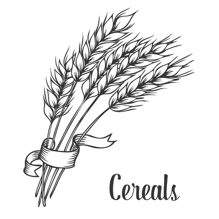 Illustration pour Wheat bread ears cereal crop with ribbon sketch decorative icons set isolated vector illustration. Hand drawn - image libre de droit
