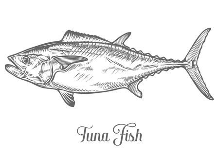 Illustration pour Tuna fish cartoon animals sketch vector illustration. Yellowfin tuna in fast motion. Hand drawn engraved etch ink illustration. Marine food. Healthy seafood. Organic product. Black on white background - image libre de droit