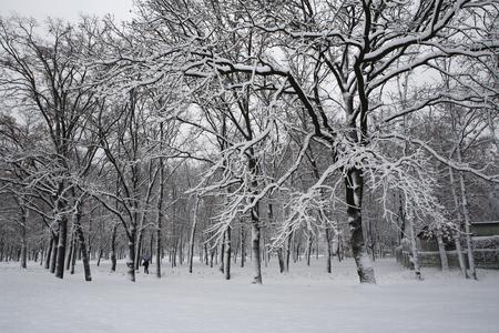 Photo pour trees in winter snow park - image libre de droit