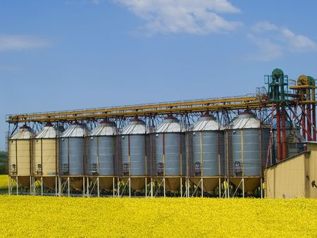 A row of grain silos surrounded by fields of rape