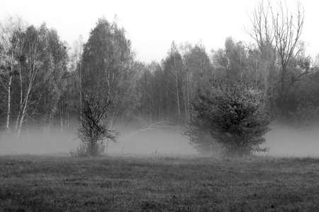 Photo pour Thick fog in the meadow near Warsaw, Poland. The silhouettes of the bushes and the trees in the forest are blurred due to the mist which rises above the field. - image libre de droit