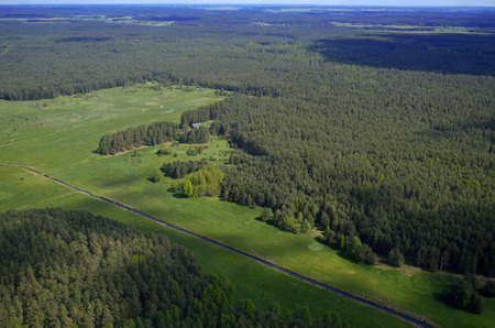 Forest at summer, aerial view, Lithuania