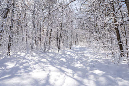 Photo pour snow covered trail through the forest in minnesota - image libre de droit