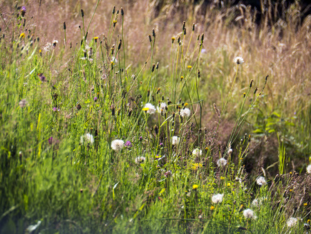 flowers and plants in the meadow