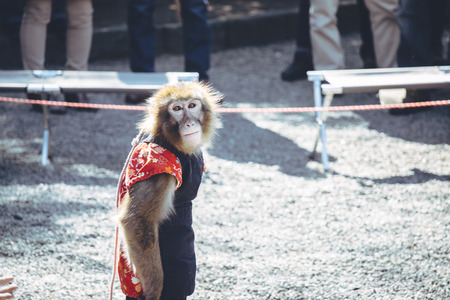 monkey circus look and prepare to show his performance.