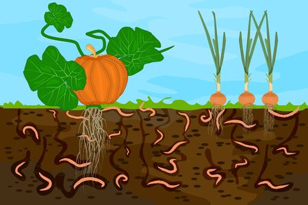 Illustration for Ground cutaway with earthworms and vegetable. Earthworms in garden soil. Air and water passage in the soil created by earthworms. Plant vegetable fresh in compost food layer of soil with worm. Vector - Royalty Free Image