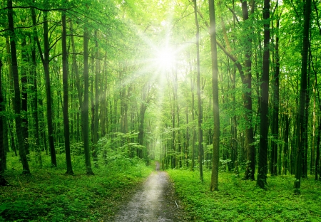 Photo pour nature tree . pathway in the forest with sunlight backgrounds.  - image libre de droit