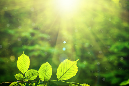 Photo for forest trees leafs on sunlight backgrounds. - Royalty Free Image