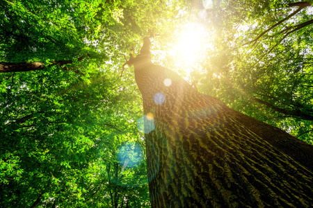 Photo pour forest trees. nature green wood, sunlight backgrounds. - image libre de droit