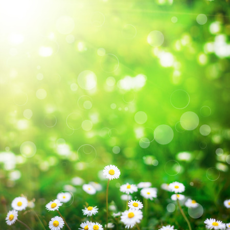 Photo pour flower field  on the sky. nature abstract - image libre de droit