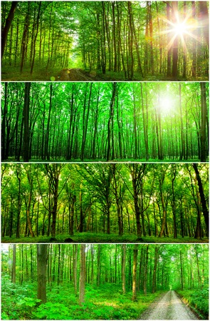 collection panorama forest trees. nature green wood sunlight backgrounds.