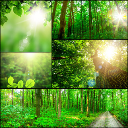 Photo for collection panorama forest trees. nature green wood sunlight backgrounds. - Royalty Free Image