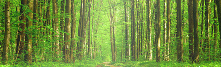 Photo pour spring forest trees. nature green wood sunlight backgrounds. sky - image libre de droit