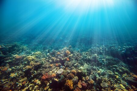 Photo pour Underwater coral reef on the red sea - image libre de droit