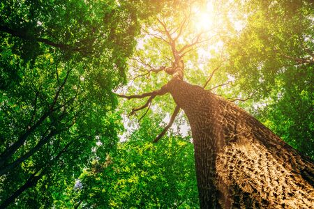 Photo for spring forest trees. nature green wood sunlight backgrounds. - Royalty Free Image