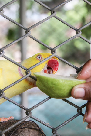 Photo of Parrots or birds hookworm - ID:30006688 - Royalty